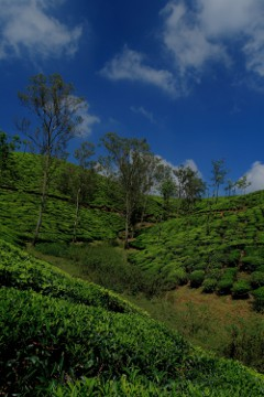 Tea estates at Valparai