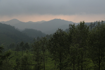 Tea Estates near Munnar