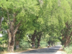 Trees near Dindigul