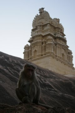 Monkey @ the temple