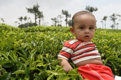Manu sitting on a Tea shrub