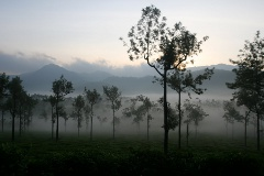 More mist covered tea estates